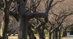 i-giardini-botanici-koishikawa