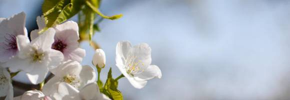 esplode-la-primavera-a-chidorigafuchi