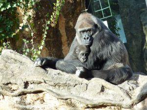 nato-gorilla-zoo-tokyo-1