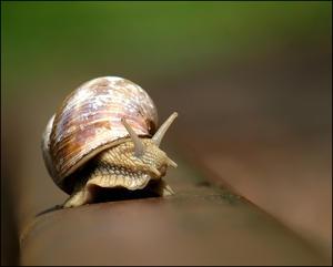 Snail on rail