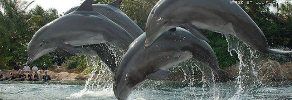 manifestazione-contro-la-caccia-ai-delfini