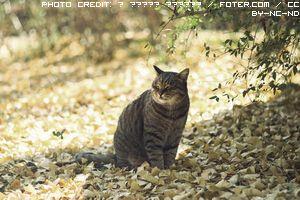 aoshima-isola-dei-felini-1