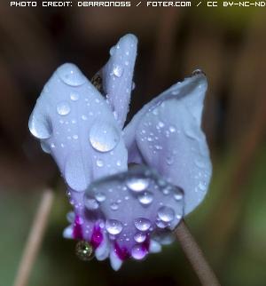 fiori-da-fukushima-1