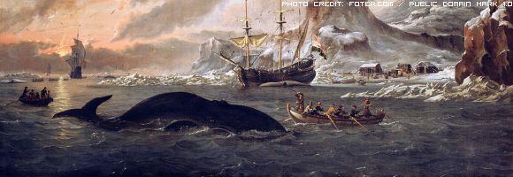 navi-baleniere-giapponesi-cacciano-nelle-aree-protette
