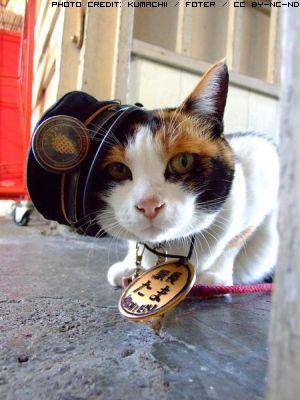 gatto-ferroviere-1