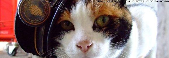gatto-ferroviere