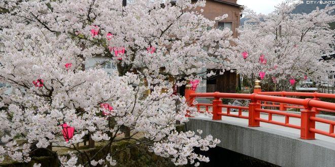 kinosaki-in-primavera-2