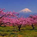 fuji-primavera-1