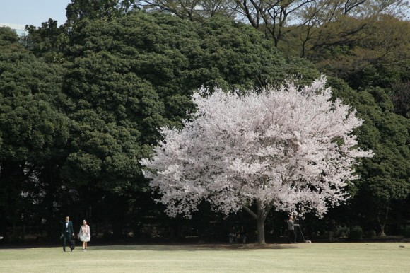 shinjuku-gyoen-national-garden-1