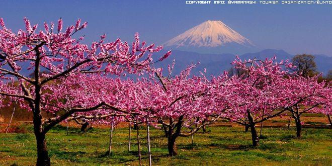 monte-fuji-in-primavera-2