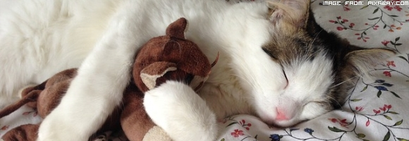 ritrovato-un-gatto-disperso-tre-anni-fa-dopo-lo-tsunami