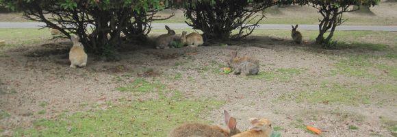 isola-dei-conigli