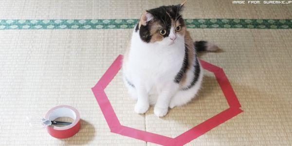 e-nato-il-cat-circle
