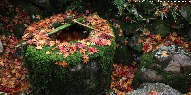 foglie-dautunno-a-kyoto
