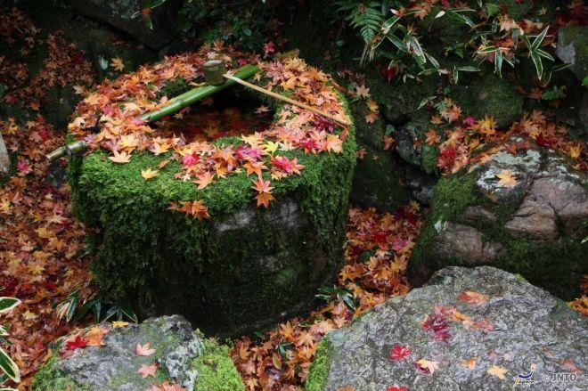foglie-dautunno-a-kyoto-1