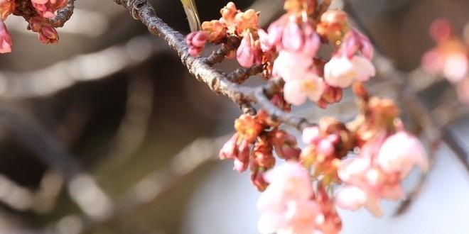 profumo-di-primavera
