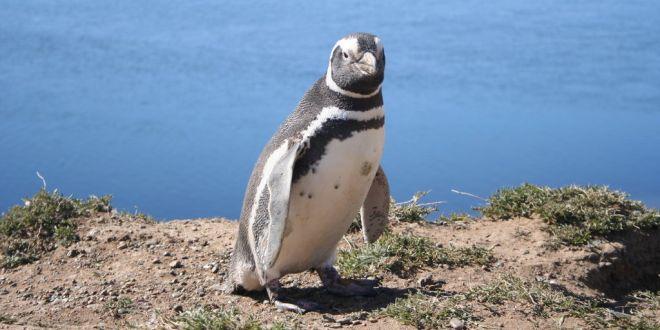 dura-vita-per-i-pinguini-arriva-il-treno-pinguino