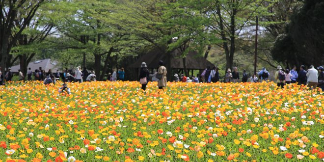 mille-colori-nel-parco