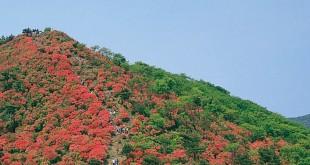 il-monte-tokusenjou-in-autunno