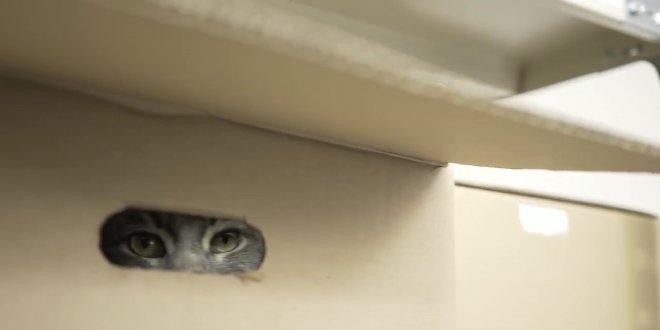 ai-giapponesi-piace-gatto