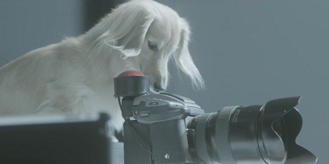 lamore-ci-unisce-ai-nostri-amici-cani
