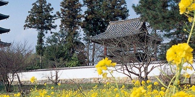 tempio-bicchu-kokubunji