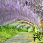 la-primavera-giapponese