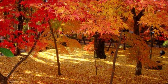 10-posti-piu-belli-giappone-visitare-autunno