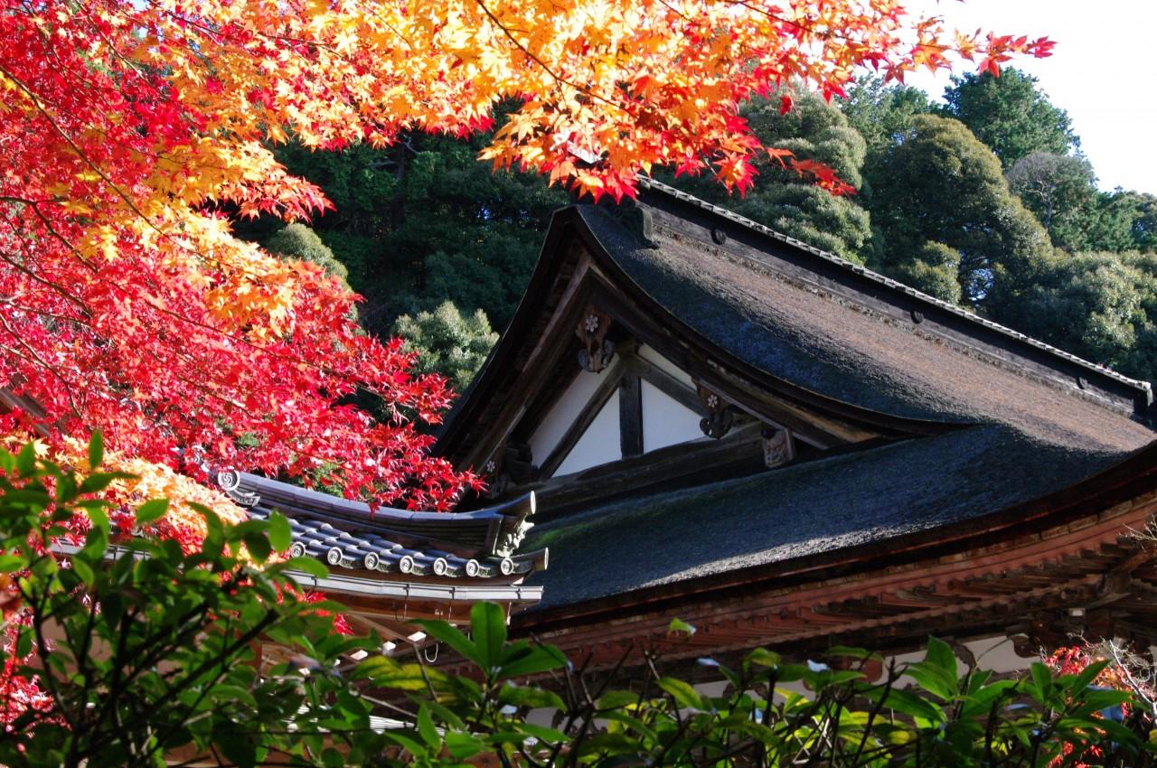 tempio-saimyo-ji