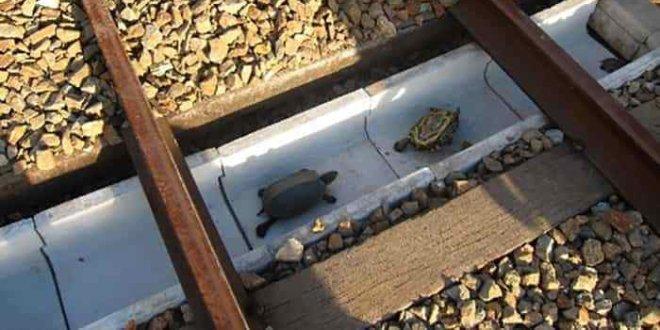 un-passaggio-le-tartarughe