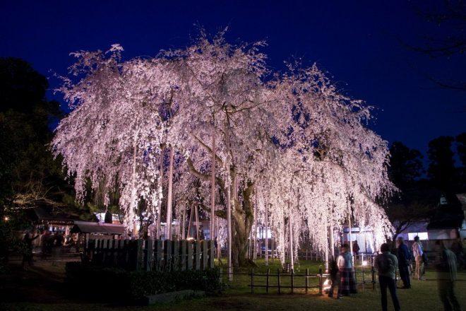 festival-primavera-fukui