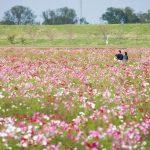 il-giardino-di-miyanoshita