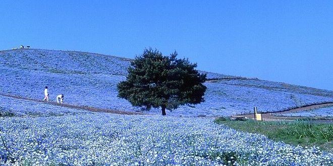 la-collina-miharashi
