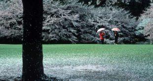 una-pioggia-di-petali