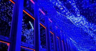 summer-light-alla-tokyo-tower