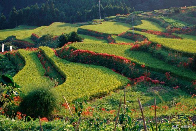 le-terrazze-eriyama