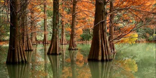 luogo-magico-della-foresta-sasaguri-kyudai