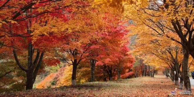 minowa-in-autunno