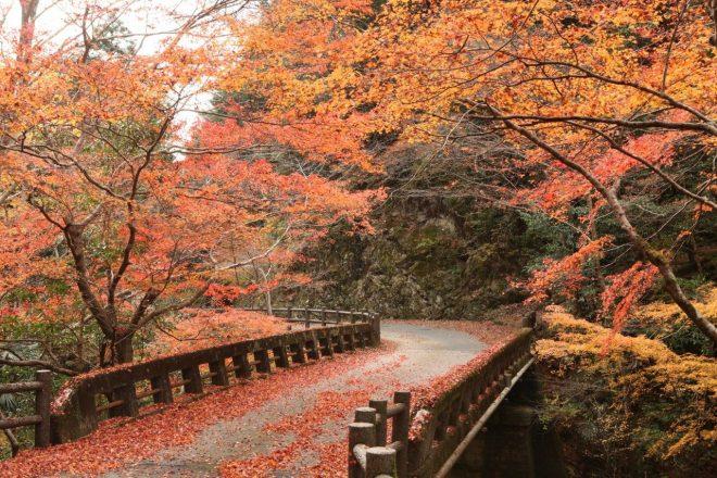 il-parco-mitaki