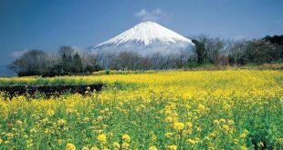 il-monte-fuji-da-fujinomiya