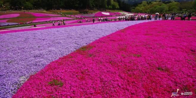 il-parco-hitsuji-yama