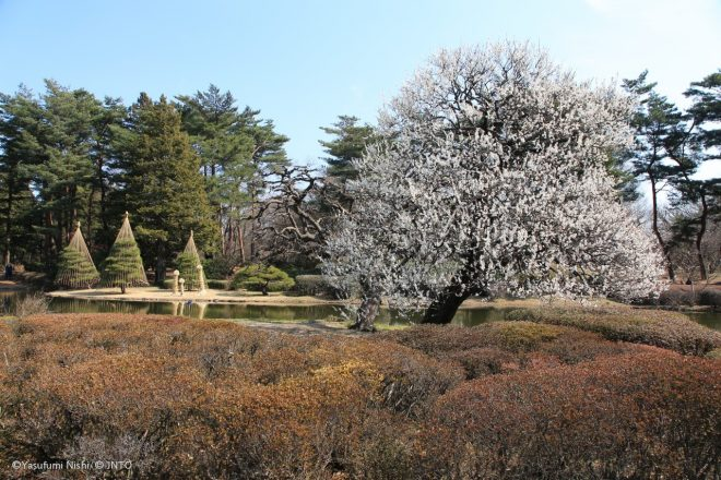 giardino-botanico-di-jindai