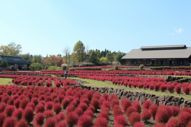 i-colori-dellautunno-nel-parco-michinoku