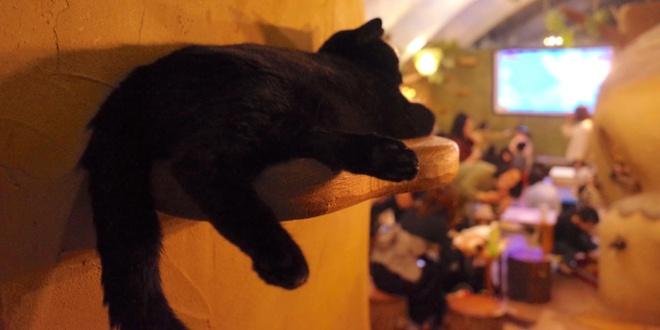 la-notte-del-cinema-felino