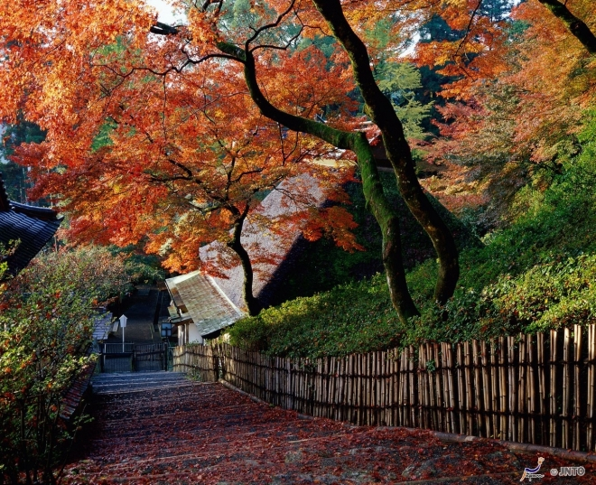 lautunno-al-tempio-daikozenji
