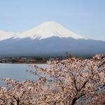 i-fiori-di-ciliegio-e-il-monte-fuji