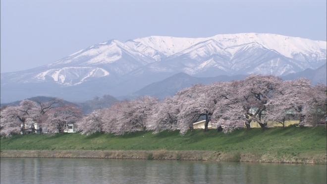 hitome-senbon-sakura