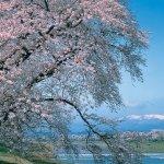 Foto dal Giappone 2020