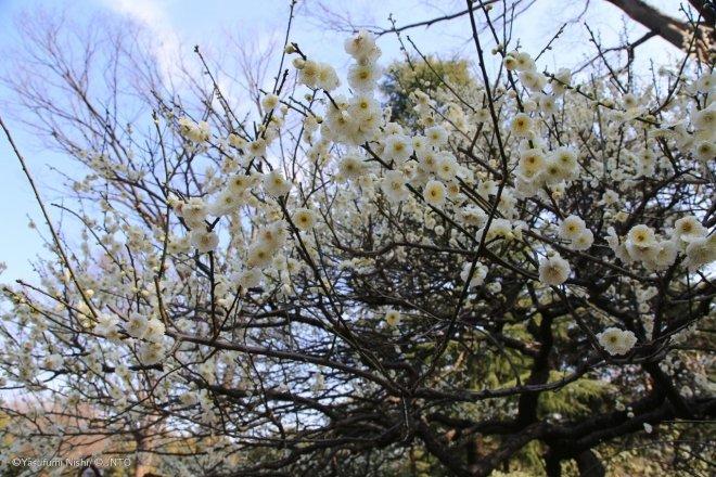 L'Orto Botanico Di Jindai