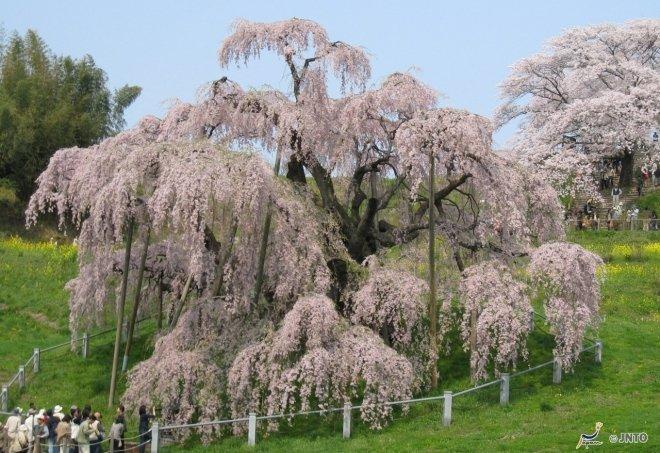 La regione di Aizu in primavera